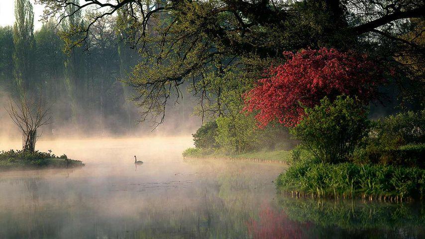 「デッサウ・ヴェルリッツの庭園王国」ドイツ, ヴェルリッツ