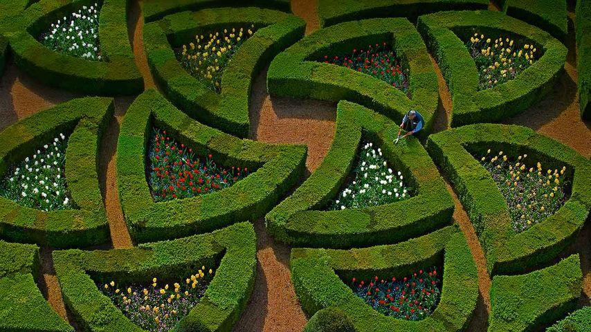 「ヴィランドリー城の庭園」フランス, ロワール渓谷