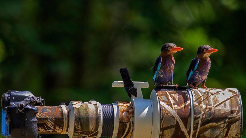 「カワセミとカメラ」インドネシア, 中部ジャワ州