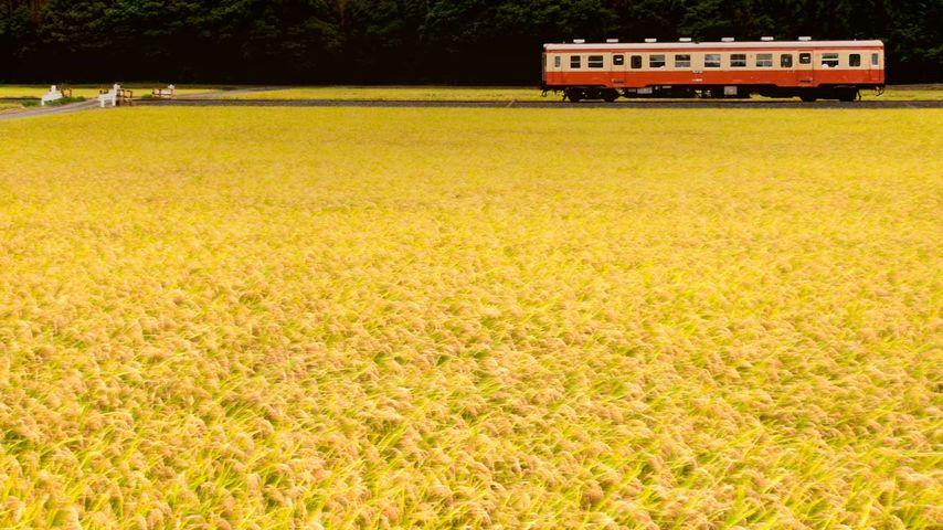 「ひたちなか海浜鉄道湊線」茨城, ひたちなか市