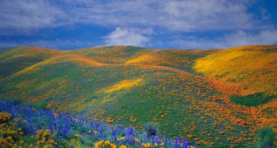 「アンテロープ・バレー」アメリカ, カリフォルニア州