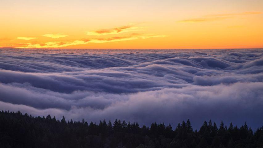 「タマルパイス山の霧」米国カリフォルニア州
