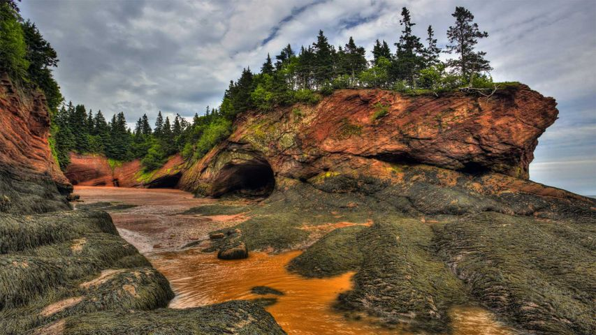 「干潮時のファンディ湾」カナダ, ニューブランズウィック州