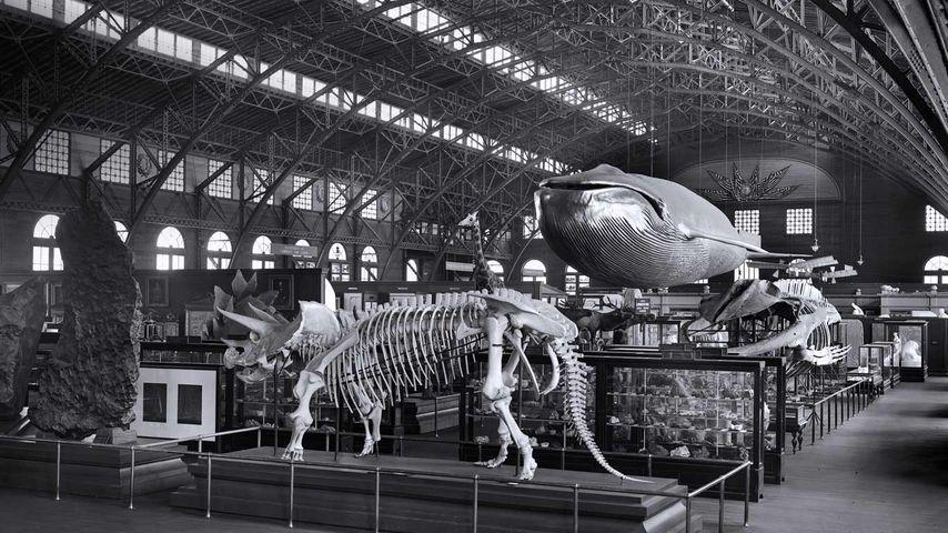 「1904年のスミソニアン博物館展」アメリカ, セントルイス万国博覧会