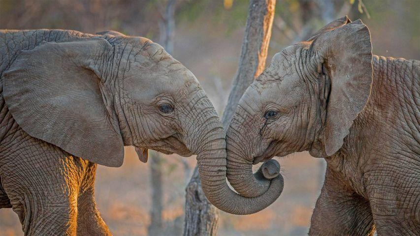 「仲良しゾウ」南アフリカ, カパマ・プライベート・ゲーム保護区