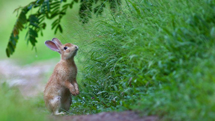 「新緑とアナウサギ」