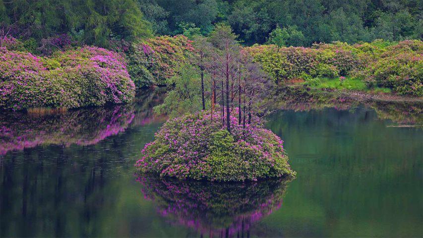 「グレン・エティブのエティブ湖」スコットランド  (© Oliver Hellowell/Minden Pictures)