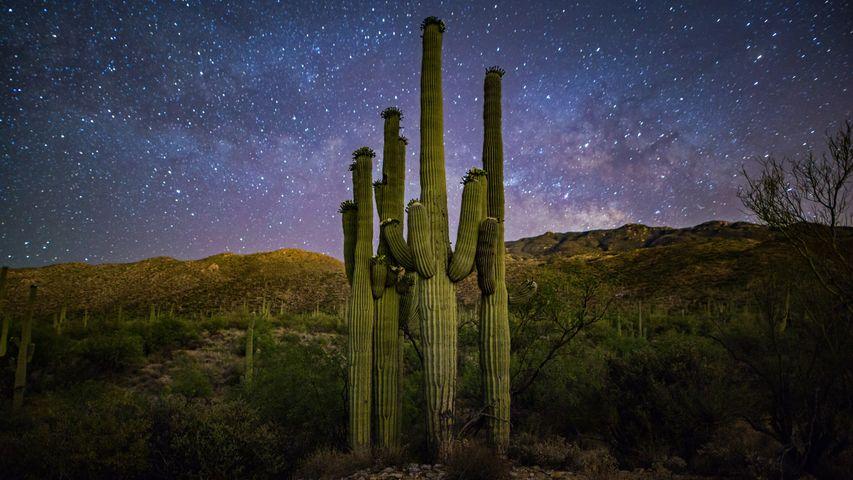 「サワロ国立公園」米国, アリゾナ州