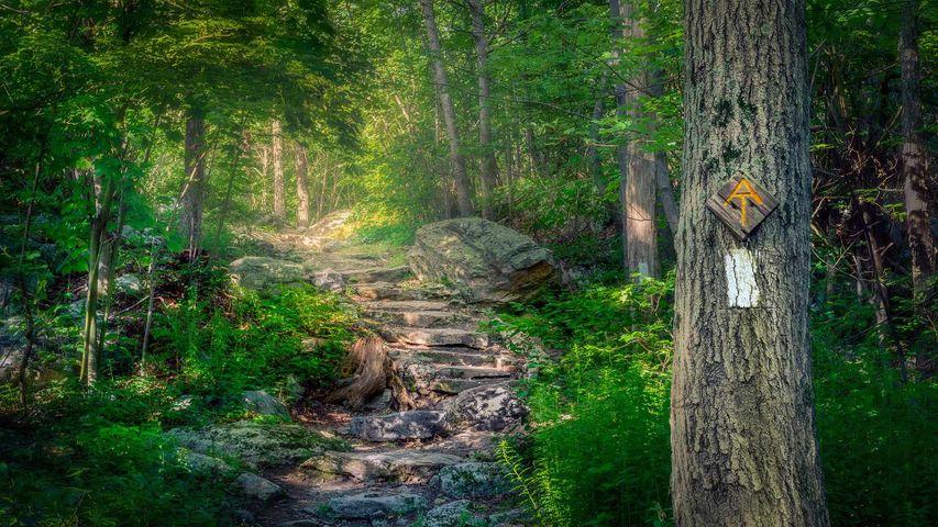 「ストークス州立森林公園のアパラチアントレイル」米国, ニュージャージー州