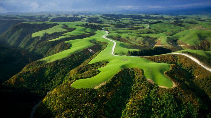 「山の上の牧草地」ニュージーランド