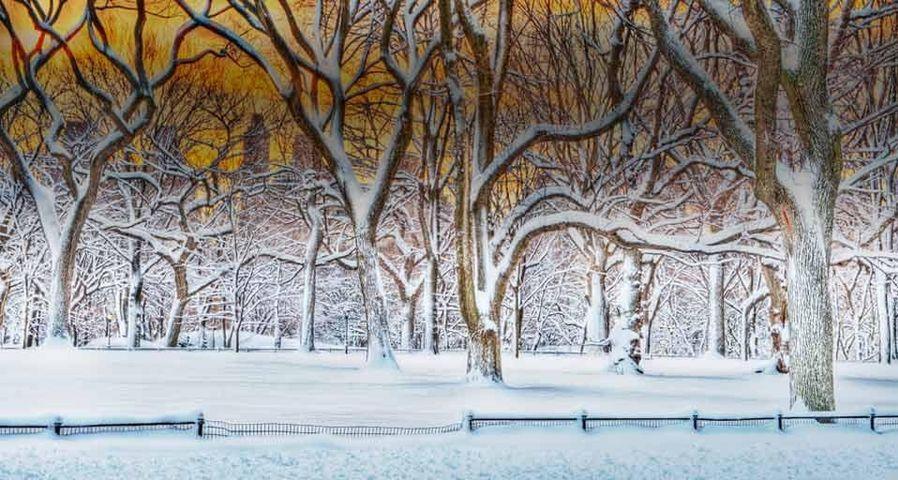 「セントラルパークの朝日」アメリカ, ニューヨーク市