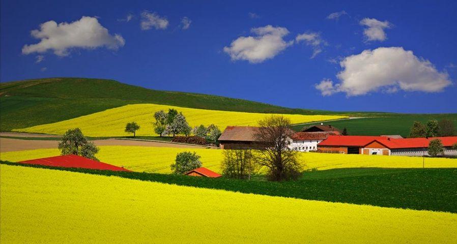 「菜の花畑」オーストリア, リート