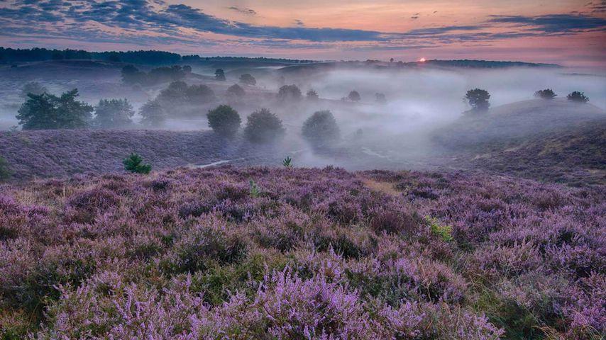 「ヒースの丘」オランダ