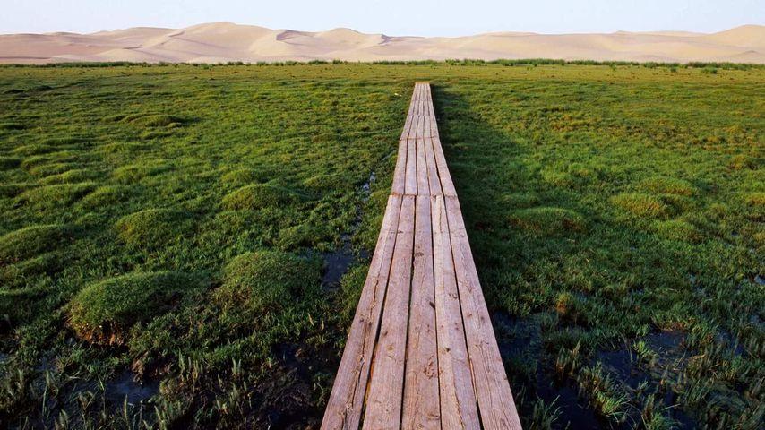 「ホンゴリン・エルス砂丘への道」モンゴル国, ゴビ砂漠