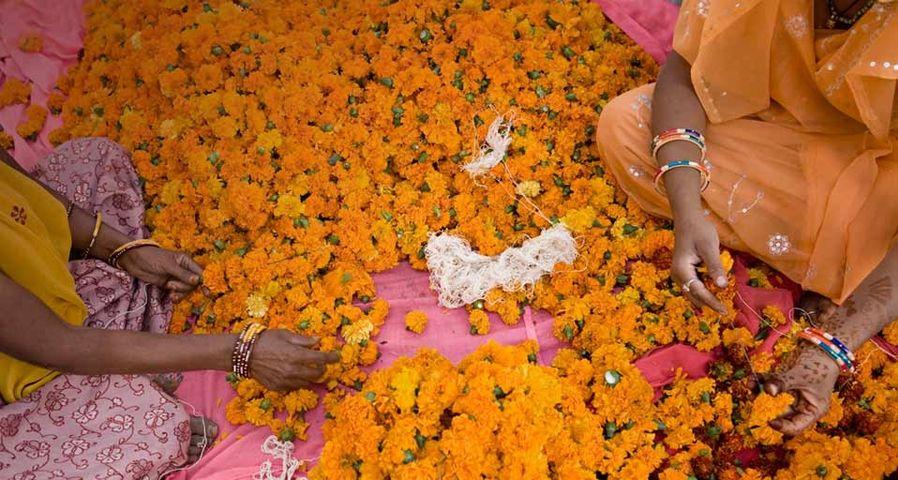 「マリーゴールドの首飾りを作る人々」インド, ラジャスタン, ジャイプル