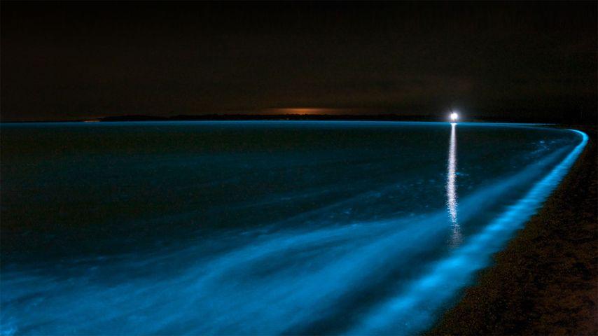 「ギプスランド湖の夜光虫」オーストラリア, ヴィクトリア州