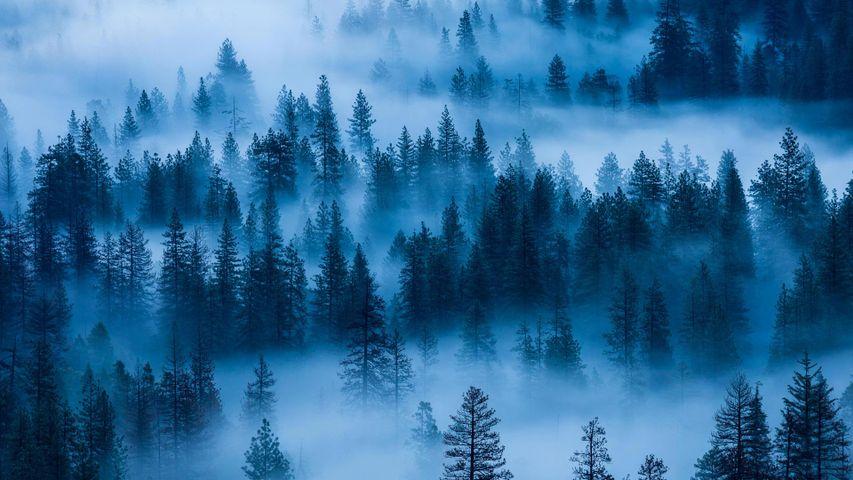 「霧のヨセミテ国立公園」アメリカ合衆国, カリフォルニア州