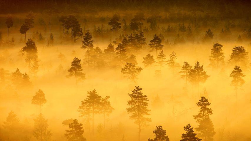 「トッロンスオ国立公園」フィンランド