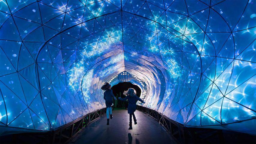 「タロンガ動物園のライトアップ」オーストラリア, シドニー