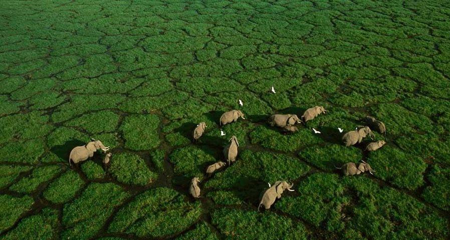 「アンボセリ国立公園」ケニア