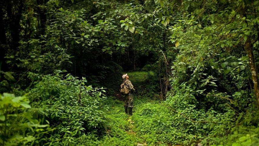 「ジャングルの中のパークレンジャー」メキシコ, エル・トリウンフォ生物圏保護区