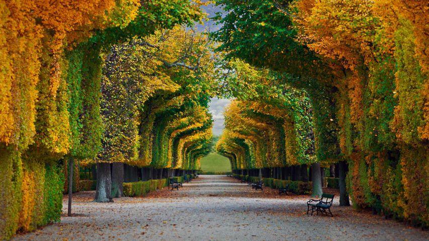 「シェーンブルン宮殿の庭園」オーストリア, ウィーン