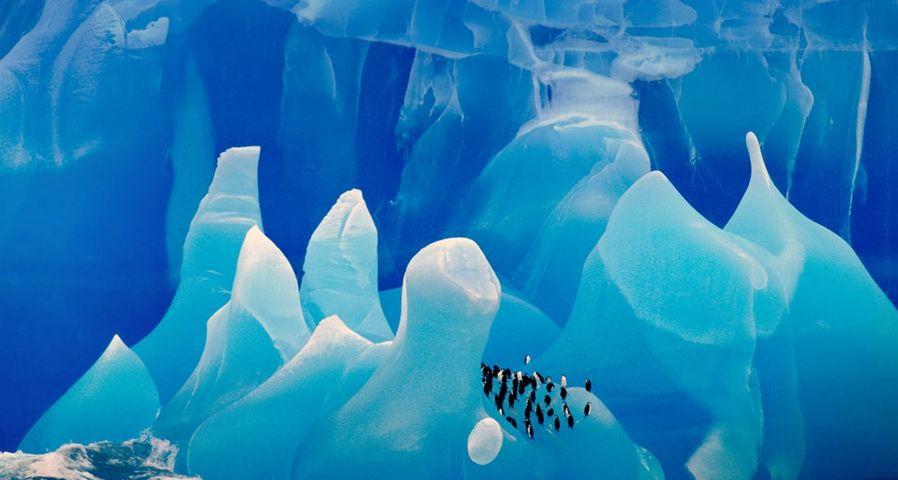 「氷河の上のヒゲペンギン」南極大陸