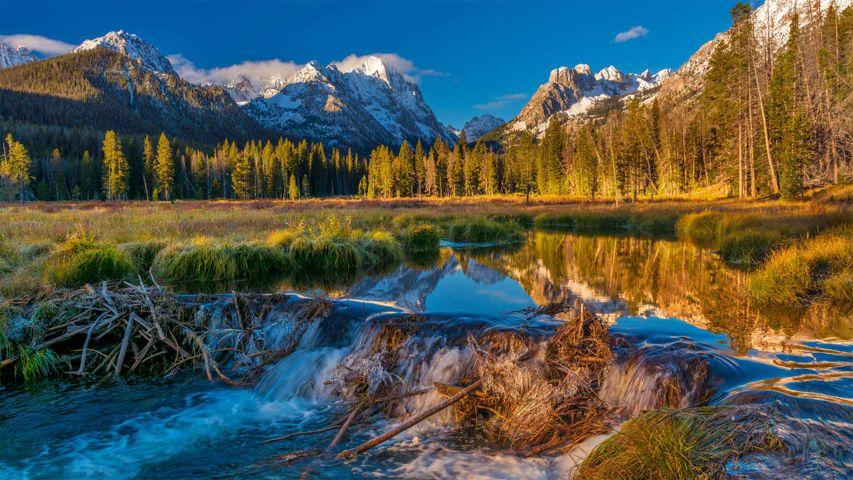 「ソートゥース国有森林のビーバーダム」米国アイダホ州