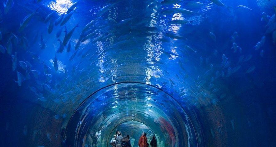 「海洋博物館」スペイン, バレンシア