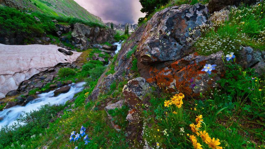 「サンファン山脈の野草」米国コロラド州
