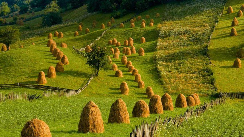 「グラ・フモールルイの牧草地」ルーマニア, ブコビナ