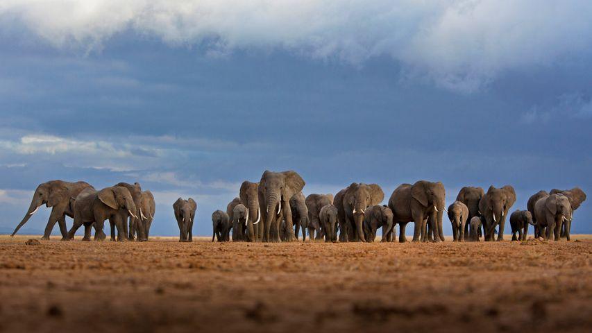 「ゾウの群れ」ケニア, アンボセリ国立公園