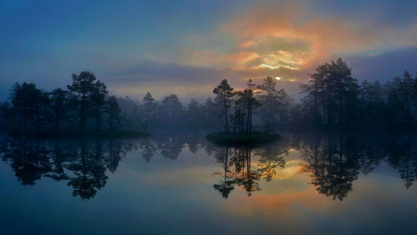 「ヴェストマンランド地方の湿地帯」スウェーデン