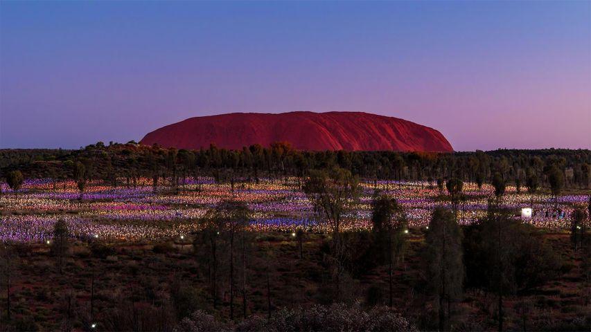 「ブルース・マンローの作品『フィールドオブライト』」オーストラリア, ウルル