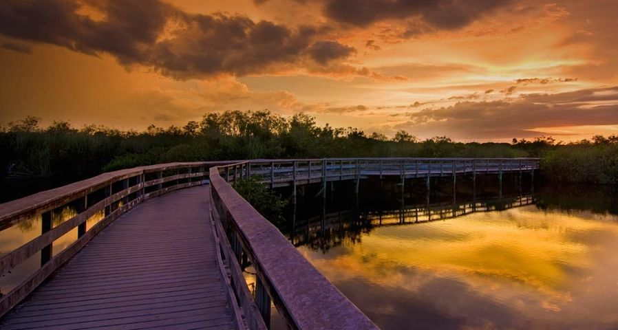 「エバーグレーズ国立公園 」アメリカ, フロリダ州