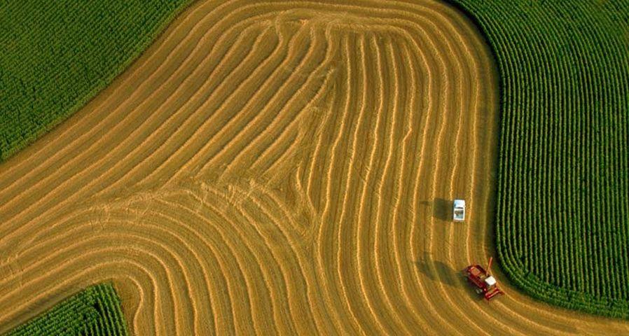 「オーツ麦を収穫するコンバイン」アメリカ, ウィスコンシン州