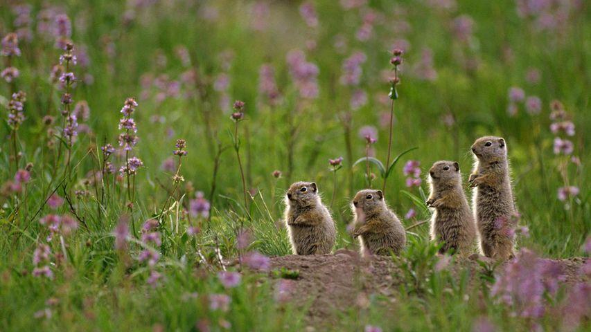 「ユインタジリス」米国ワイオミング州, イエローストーン国立公園