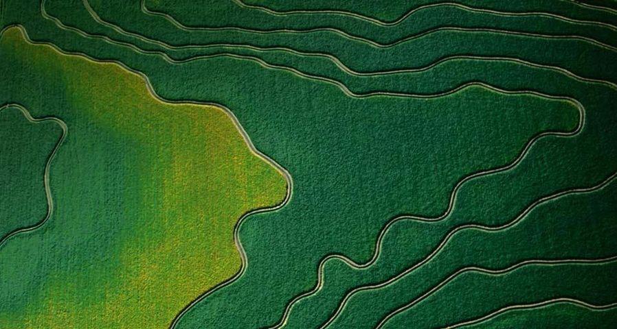 「空から見た農地」アメリカ, アリゾナ州