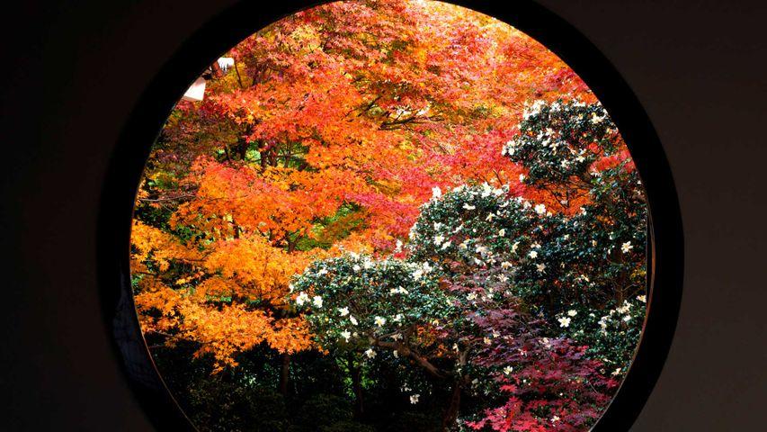 「悟りの窓の紅葉」京都, 源光庵
