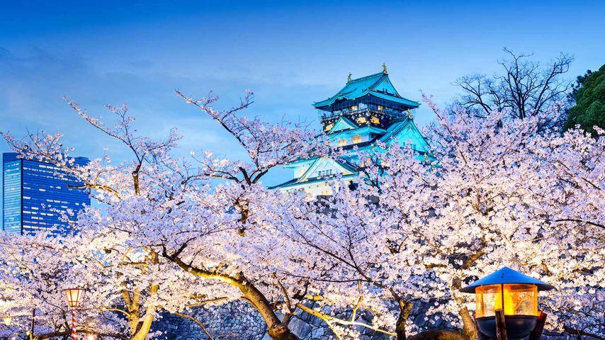 「桜と大阪城」大阪
