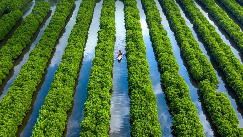 「バウカカイのマングローブ林」ベトナム, クアンガイ省