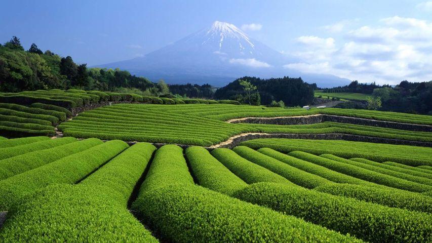 「富士山と茶畑」静岡