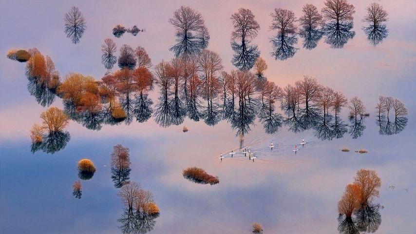 「プラニア平原の洪水」スロヴェニア, プラニア