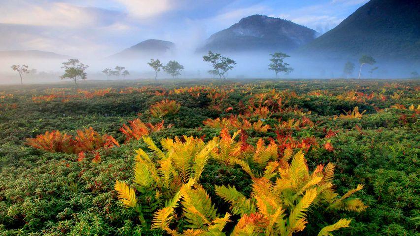 「シダの紅葉」北海道