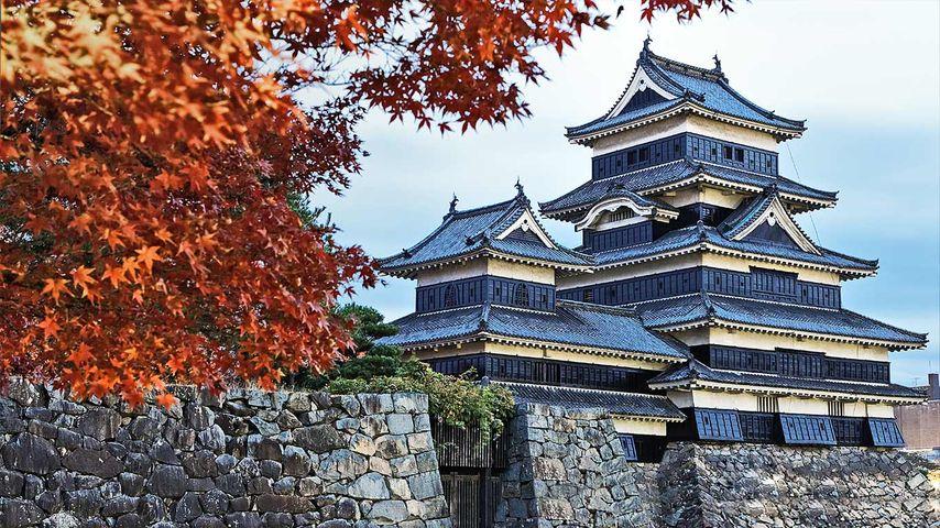 「紅葉と松本城」長野, 松本