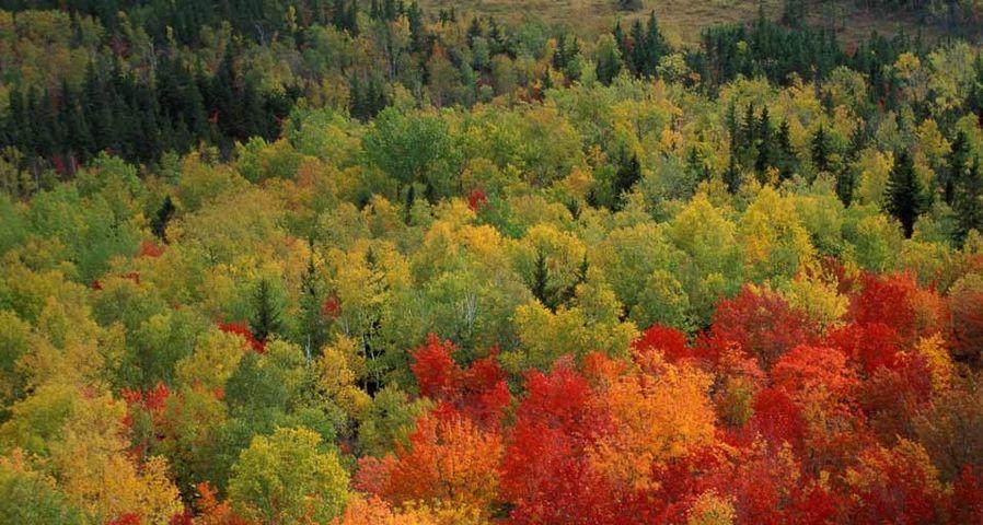 「ラッセル池の紅葉」アメリカ, メイン州, バクスター州立公園