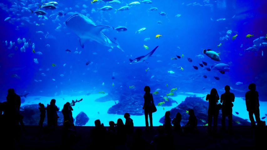 「ジョージア水族館」米国ジョージア州, アトランタ