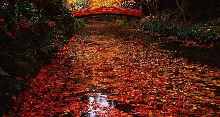 「小国神社の紅葉」静岡, 森町