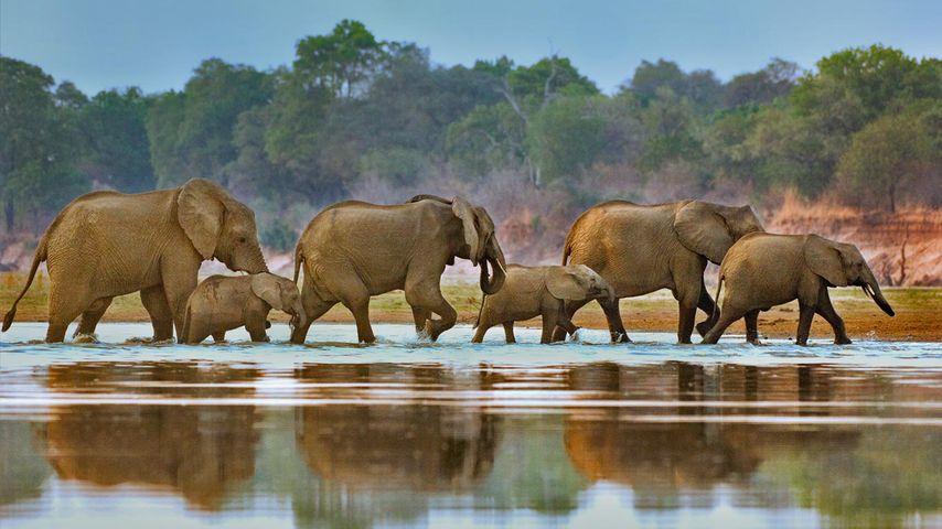 「ゾウの家族」