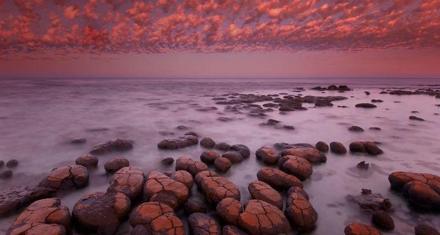 「ストロマトライト」オーストラリア, シャーク湾